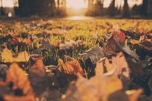 Niagara autumn events